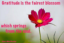 gratitude is the fairest blossom flower quotes inspirational