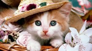 اروع واحلى صور قطط اريد صورة قطة جميلة رسائل حب
