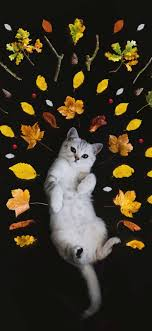 cute cat wallpapers for iphone cat t