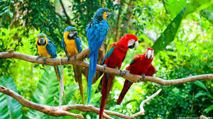 macaw wallpapers wallpaper cave