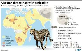 cheetah as study reveals extinction threat