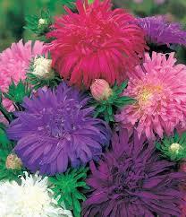 daftar nama bunga gambar bunga cantik indah unik dan langka