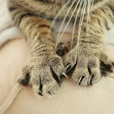 how to get cat smell out of couch