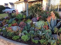 how to grow a cactus and succulent garden