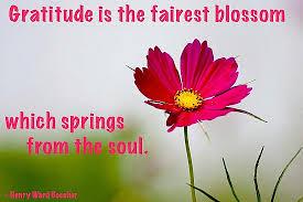 gratitude is the fairest blossom quote picture