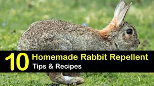 10 Easy To Follow Rabbit Repellent Solutions