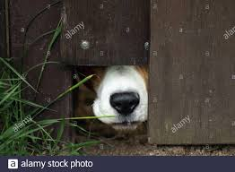 Hole In The Fence High Resolution Stock Photography And Images Alamy