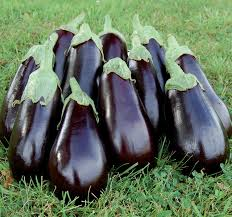 how to grow eggplant houzz