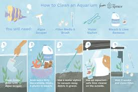 how to clean a dirty fish tank the