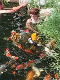 okanagan koi and water garden kelowna