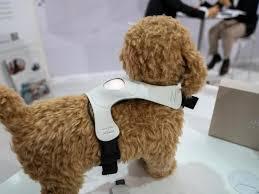 hunde sensor und ar spiegel bunte