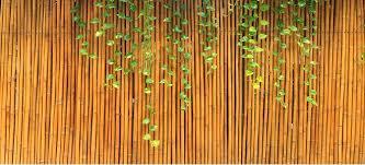 5 Benefits Of A Bamboo Fence Doityourself Com