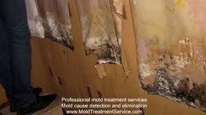 mold removal from the wall under