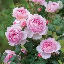 اجمل صور ورد طبيعي احلى الزهور الطبيعية اغراء القلوب