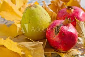 autumn leaves quince and pomegranate