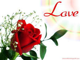 red flower wallpapers love free
