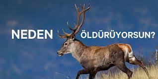 """Avcılık tamamen yasaklansın!"""" – Milas Bakış Gazetesi – Milas Haberleri"""