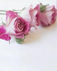 اجمل زهور وورود