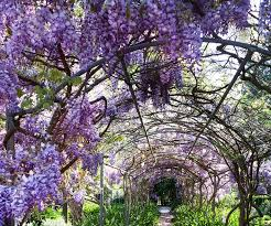 The Best Climbing Plants For Australian Gardens Homes To Love
