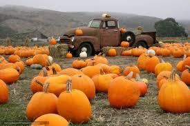 wallpaper truck pumpkin farm