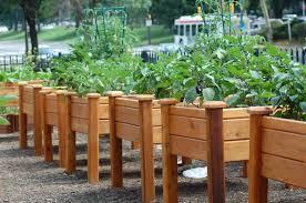 raised bed gardening elevated garden