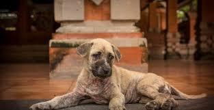 clean dried dog diarrhea off carpet