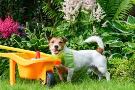 poisonous plants for dogs cats and