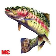 Rainbow Trout Decal 6x5 5 Sticker Car Laptop Bo
