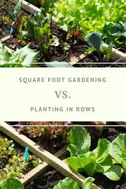 rows outweigh pros of square foot gardening