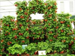 pallet planters for fresh strawberries