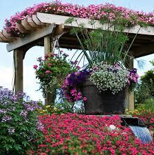 summer bedding plants gardening tips