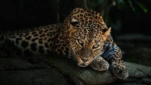 jaguar wallpapers hd desktop and