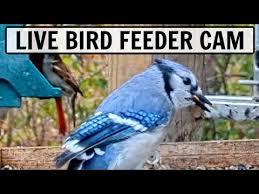 50 gift ideas for bird watching bird