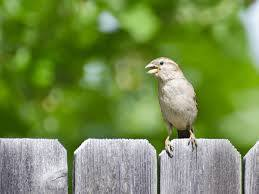 keep birds away from your patio pool