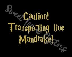 Caution Transporting Live Mandrake Mandrakes Car Decal Etsy