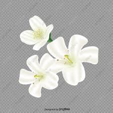 الياسمين أبيض زهور مواد الديكور Png وملف Psd للتحميل مجانا