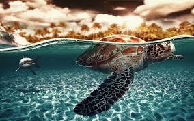 sea turtles desktop wallpaper 60 images