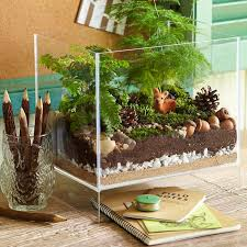 terrarium plants be equipped where to