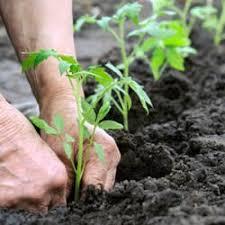 gardening near farmingdale ny 11735