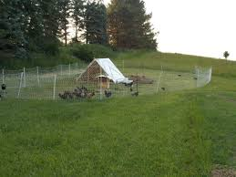 Chickens Chickens Everywhere Raising Chickens Chickens Backyard Raising Rabbits For Meat