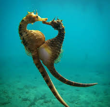 10 Interesting Facts about Seahorses