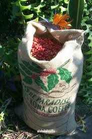 KONA coffee - my favorite in the whole wide world. | Kona coffee ...