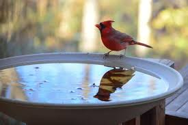 7 best bird baths of 2020
