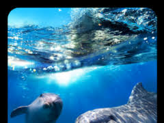 dolphin 3d live wallpaper 2 6 free