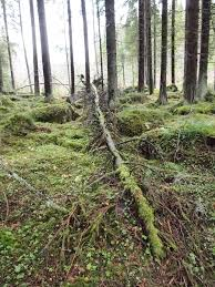 if a tree falls in a forest