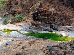 11 mejores imágenes de Socotra   Socotra, Océano indico, Llanuras costeras