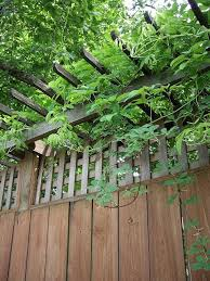 Privacy Wall Trellis And Vine Privacy Landscaping Backyard Privacy Fence Design