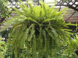 Image result for ferns