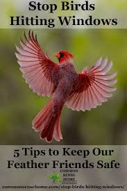 Stop Birds Hitting Windows 5 Tips To Protect Our Feathered Friends