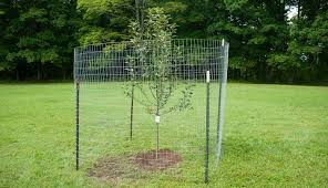 Build A Simple Fence To Protect Fruit Trees From Deer Hobby Farms